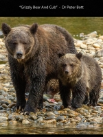 DI_DNAT_01_ACPT_Accepted_Bott_Dr Peter__Faversham #06 District Camera Club_1255_Grizzly Bear And Cub.jpg