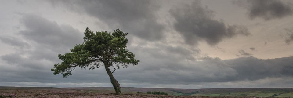 Lone Tree Egdon Moor by Jenny Monk Entry in PDI Colour in 2015 Exhibition